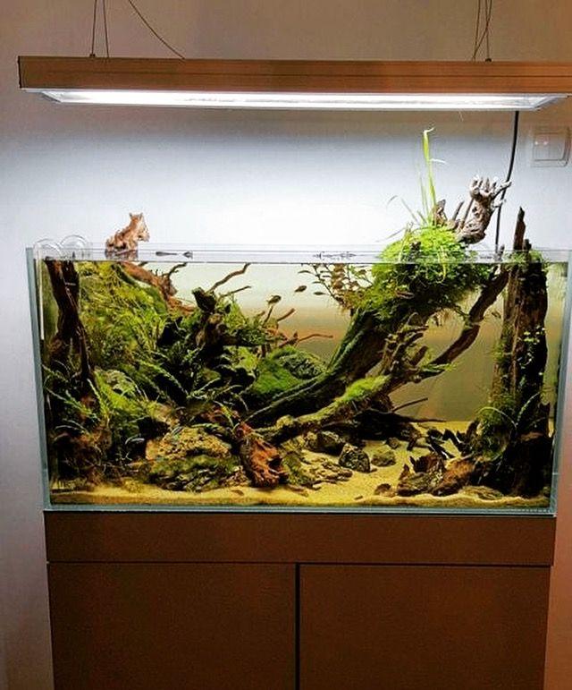Nature aquarium www.ibrio.it your aquarium born here ! il tuo acquario nasce qui ! https://www.facebook.com/ibrio.it #ibrio #acquario #acquari #acquariologia #acquariofilia #aquarium #aquariums #piante #natura #pesci #zen #design #arredamento #layout #layouts #layoutdesign #roccia #roccie  #moss #freshwater #plantedtank #aquadesignamano #tropicalfish #fishofinstagram #aquaticplants #natureaquarium #nanotank #reefkeeper #nanoreef #saltwateraquarium from web