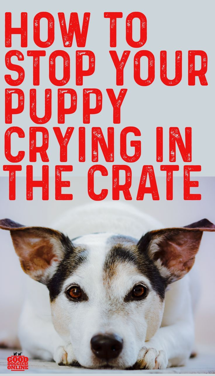 5 Ways To Stop Your Puppy From Crying In Crate Dog Training Dog