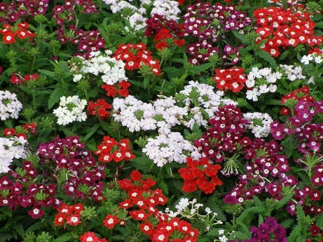 Perennials That Bloom In August And September