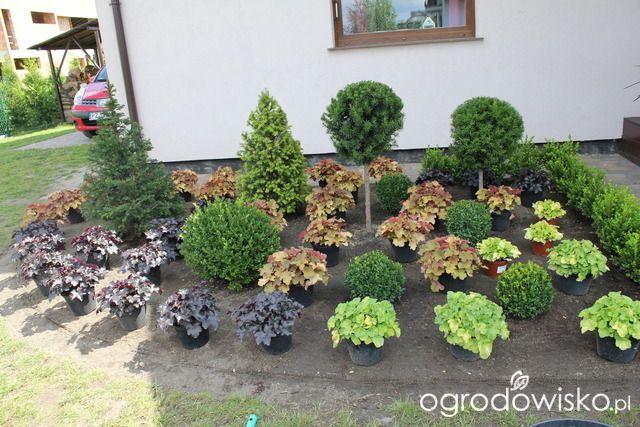 Przedwiośnie ogrodu..:) - strona 15 - Forum ogrodnicze - Ogrodowisko