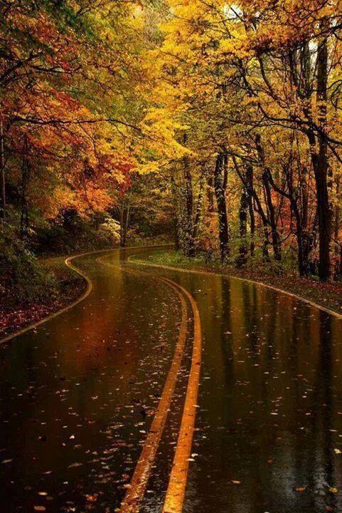 Weg met herfstbomen in de regen