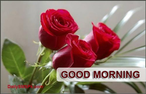 Good Morning Quotes Red Rose : Best flowers images on pinterest gardening beautiful