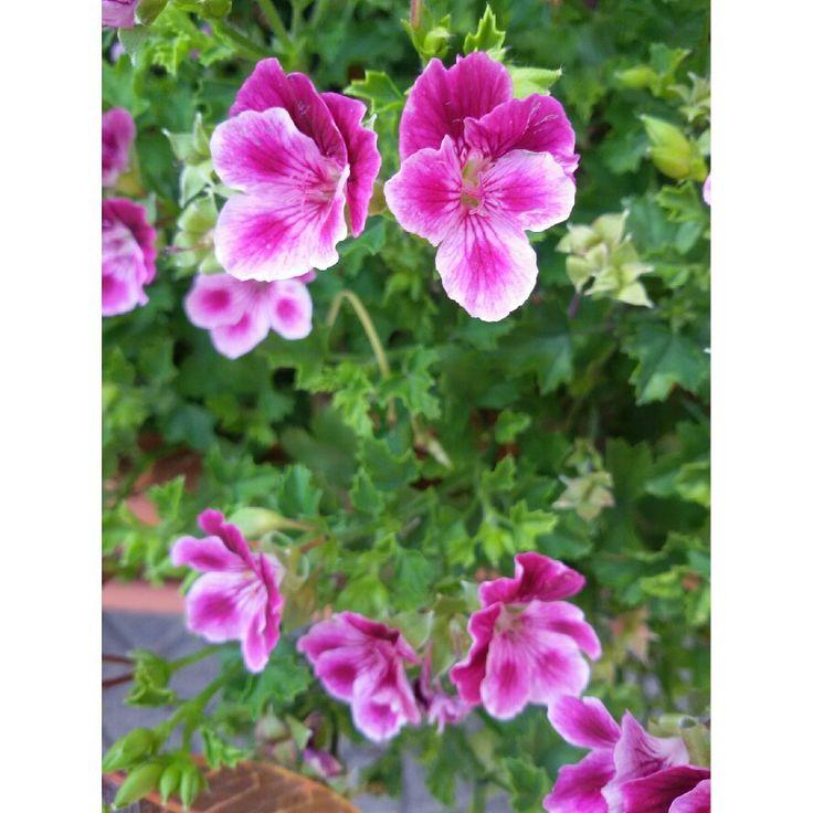 #flower#flowers#nature