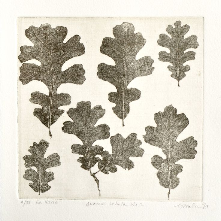 QUERCUS LOBATA No. 2, original copperplate etching, fine art printmaking, Valley Oak leaves in warm gray