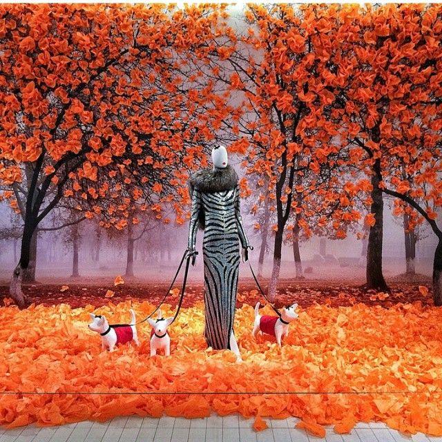 Best 25 Autumn Window Displays Ideas On Pinterest