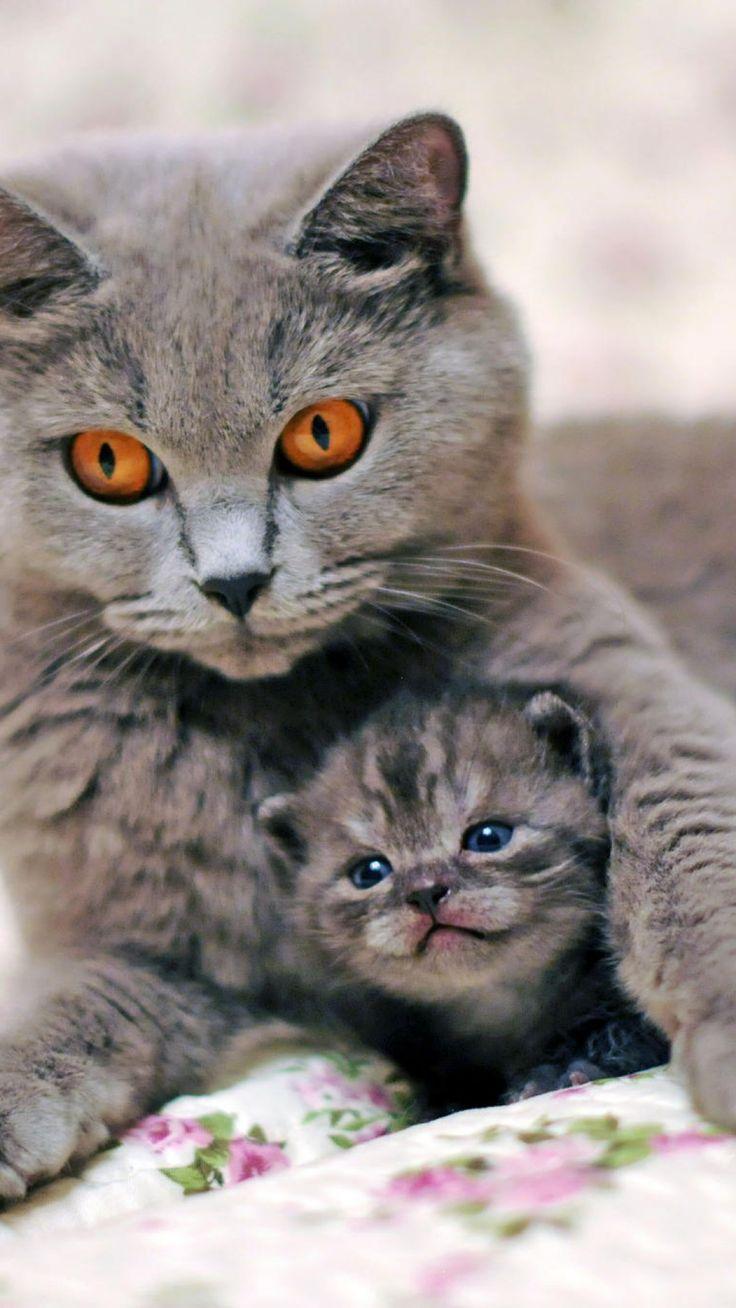 cat, kitten, caring, tenderness