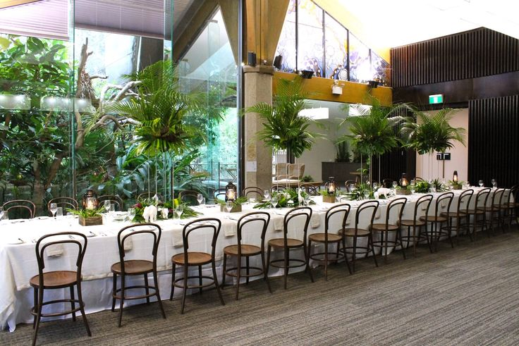 Rainforest Room at Melbourne Zoo. Tamarin monkeys peak through window at the event! Fresh tropical theming.
