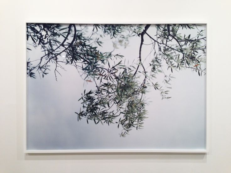 A beautiful photo by Joann Verburg;  Olive Trees, Looking Up, 2003.