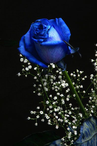 blue roses in the bridesmaids bouquets with white & pink accents