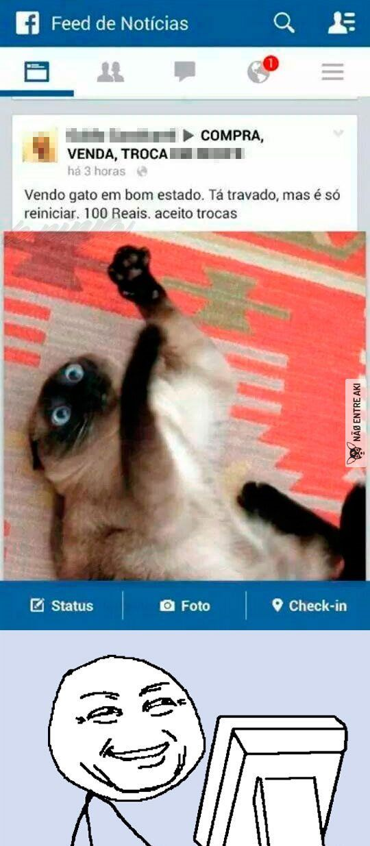 gato com pequeno defeito...