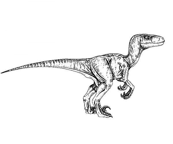 Jurassic Park Velociraptor Coloring Page With Images Jurassic