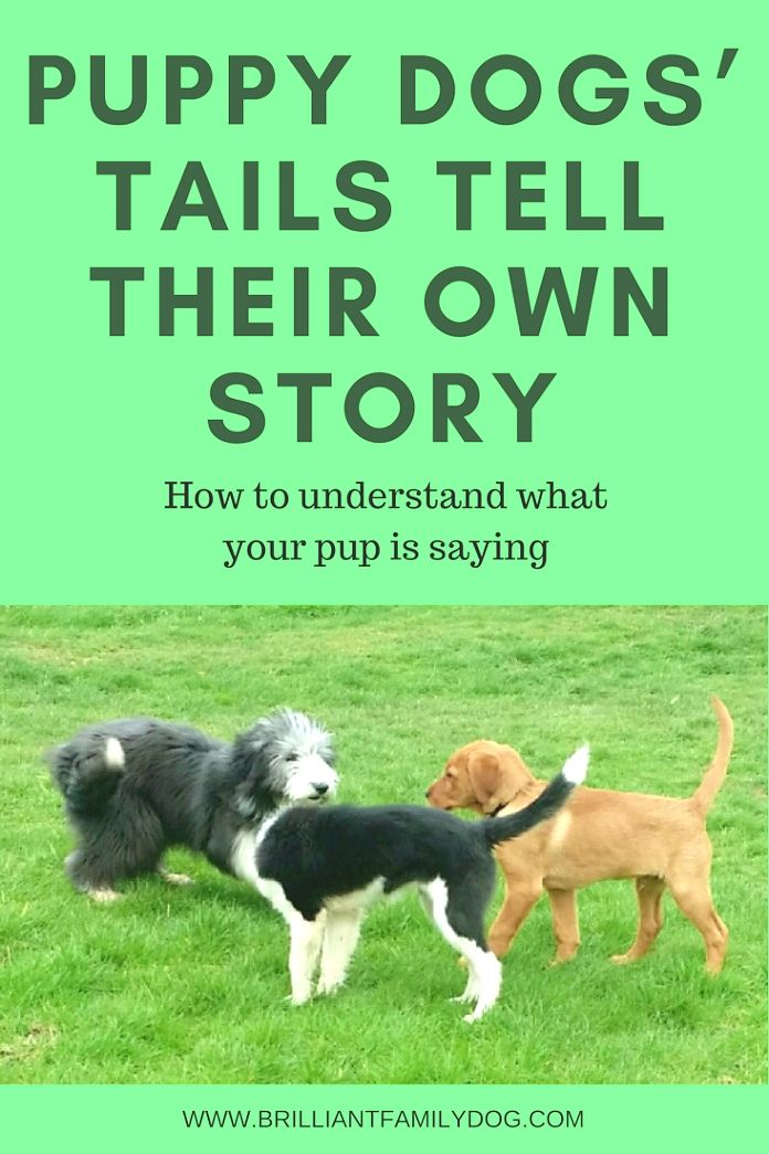Dog Training Ideas If You Re Trying To Train A Dog Yourself Use