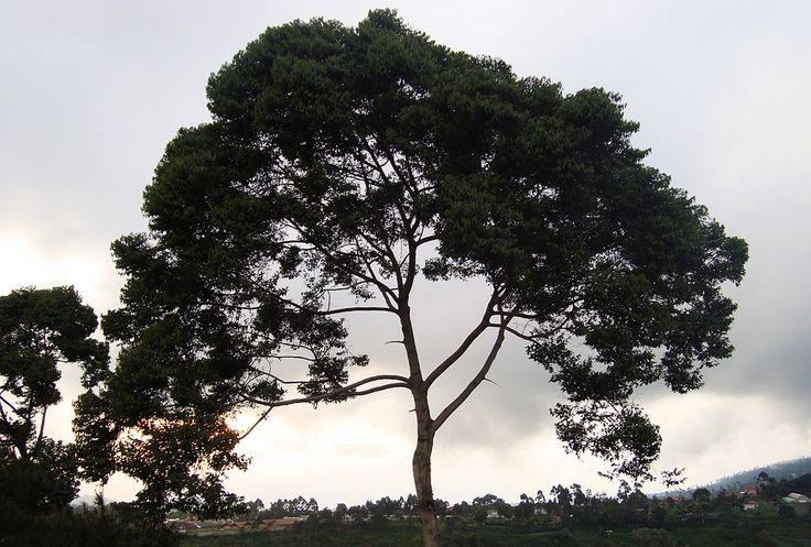 https://flic.kr/p/dJ4QBD | trees