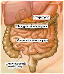 GKOUROU : Όλες οι ασθένειες προέρχονται από το έντερο. Πώς να το καθαρίσετε