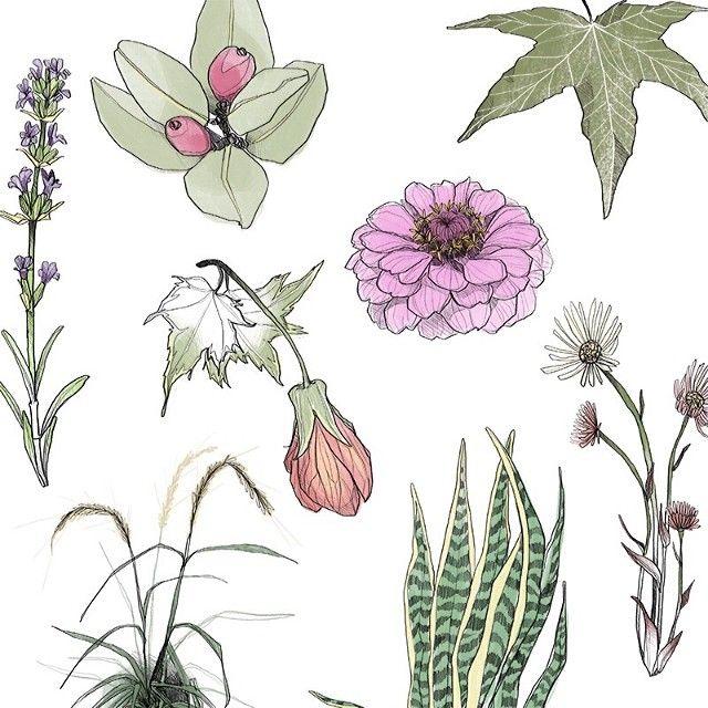 Ilustración floreada por el diseñador gráfico e ilustrador chileno: Vicente Reinamontes, quien suele realizar ilustraciones con formas ornamentales y motivos florales. Puedes conocer más de él en su web: www.reinamontes.com 🔎  #talentochileno #fashionblog #difundimosmoda
