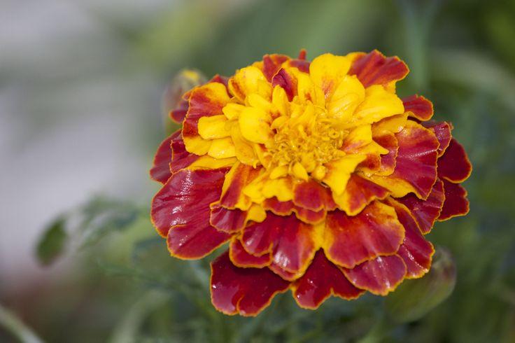 Back yard flower
