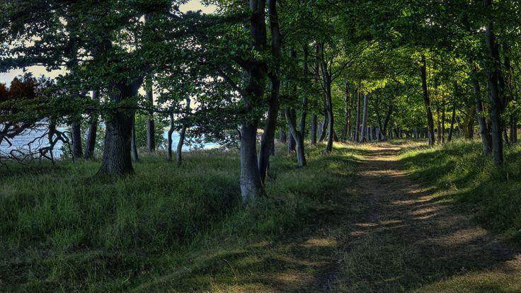 Æbelø - Forest path east coast | Flickr - Photo Sharing!