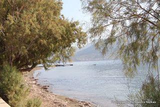Telendos  Discovering Kos and the surrounding islands http://www.discoveringkos.com/2013/11/telendos.html