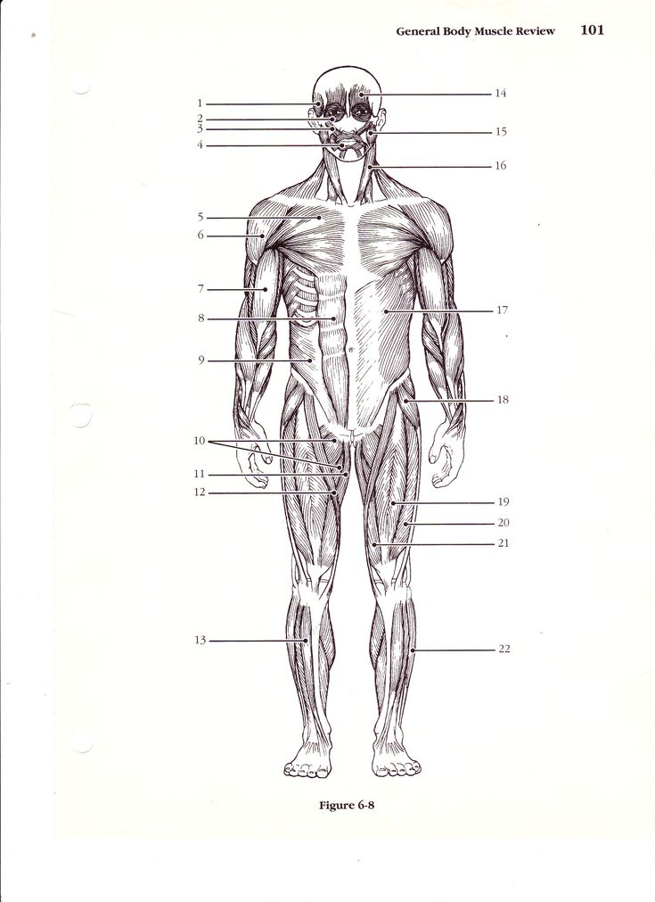 71 best Anatomy images on Pinterest | Anatomy, Anatomy reference and ...