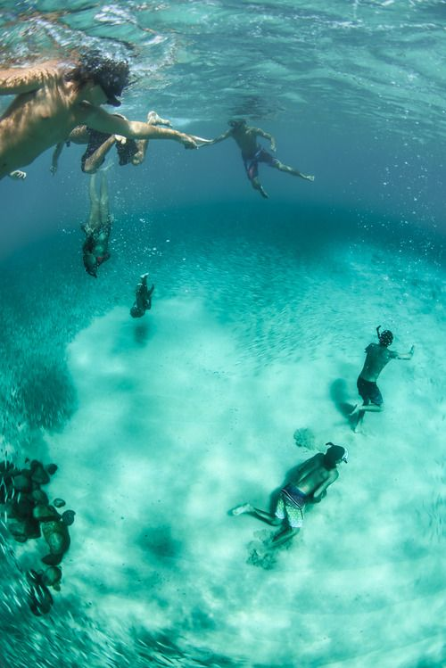 Scuba. Snorkel. Dive. Swim. See. Explore. Wonder.