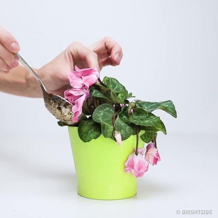 Pravdepodobne aj vy máte doma aspoň jednu izbovú rastlinu. 3 ingrediencie, ktoré privedú vaše zvädnuté izbové kvety opäť k životu! Návod ako postupovať