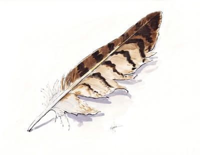 feather paintings | ... step-by-step watercolor demonstration on how to paint a hawk feather