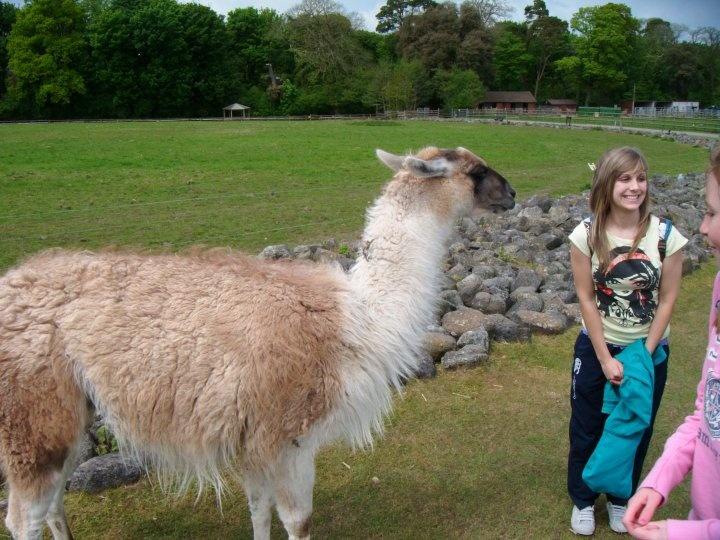 An alpaqa/llama? :)
