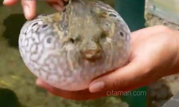 Aquarium Air Tawar Terbesar Di Dunia Taman Mini Indonesia Indah