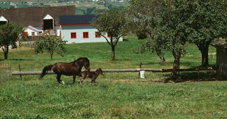 """Como conseguir um cavalo divino no Howrse. Um jogo online com mais de 73 mil jogadores em 22 países, Howrse.com é um lugar para reproduzir, treinar, leiloar e fazer corridas com cavalos virtuais, para obter """"equus"""" (moeda do jogo) e pontos """"karma"""". Cada jogador começa com um pônei ou cavalo e deve cuidar do animal diariamente, até ter o direito de leiloá-lo ou vendê-lo. Os cavalos divinos ..."""