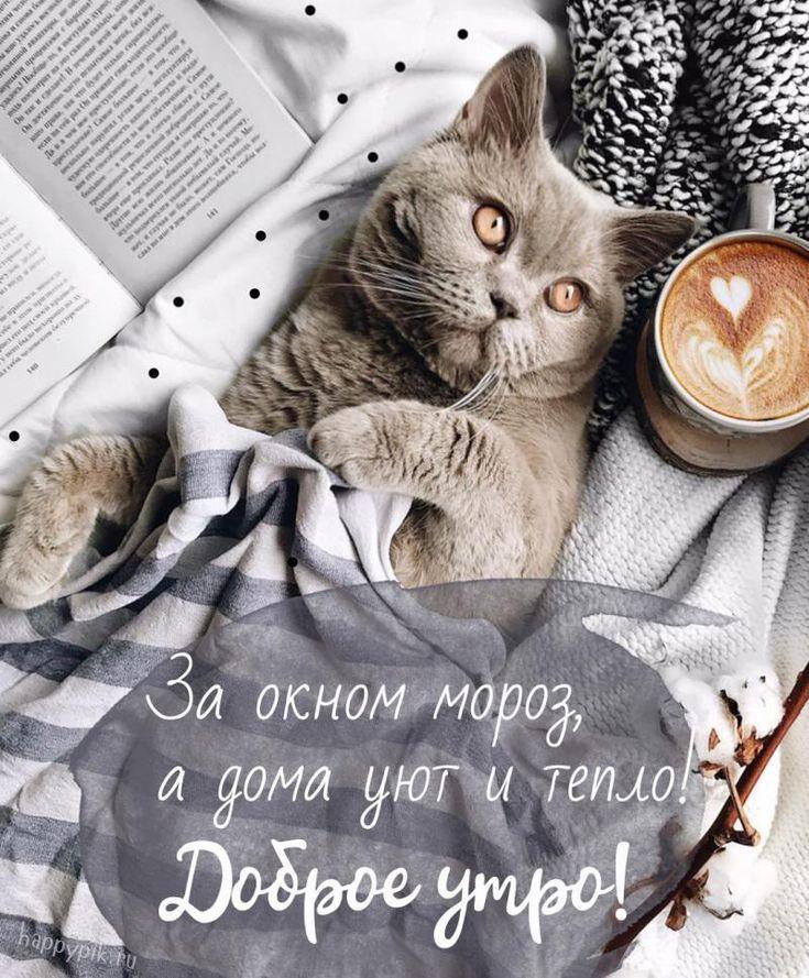 Утро музыкальная, привет доброе утро картинки прикольные с высказыванием