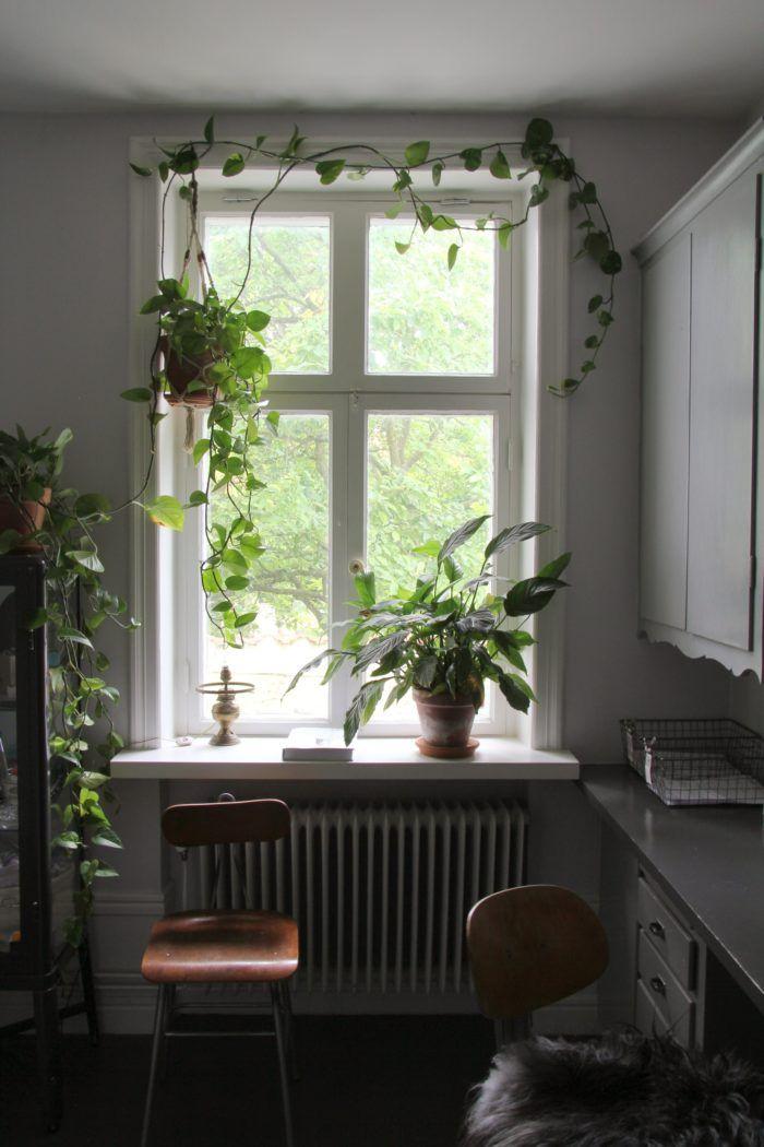 Gullranka i fönstret