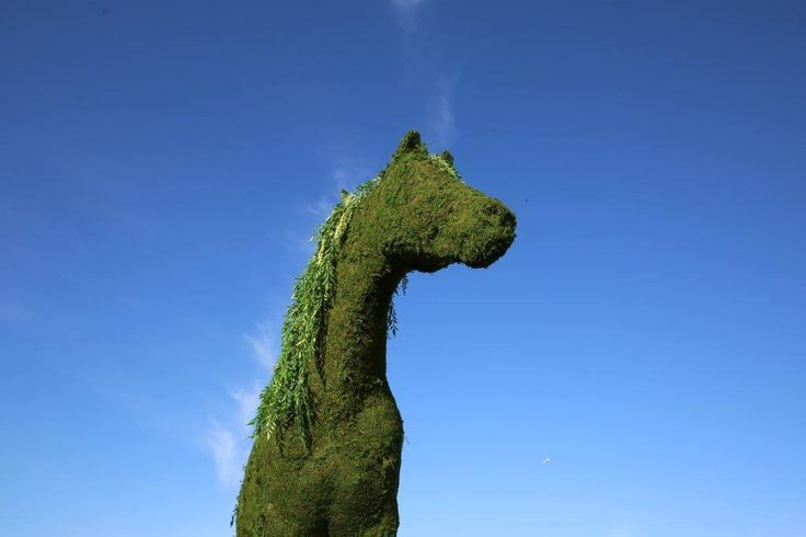 moss, horse, blue sky, garden party, race day, mad hatter, forest, garden, hedge,