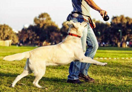 #Kliker, czyli jak łatwo wyszkolić psa?