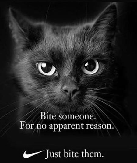 Bite Someone. For No Apparent Reason. Just... Funny cats