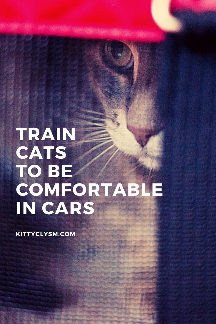 How To Train Cats To Be Comfortable Calm In Cars It S Easy I Promise In 2020 Cat Training Cats Cat Problems