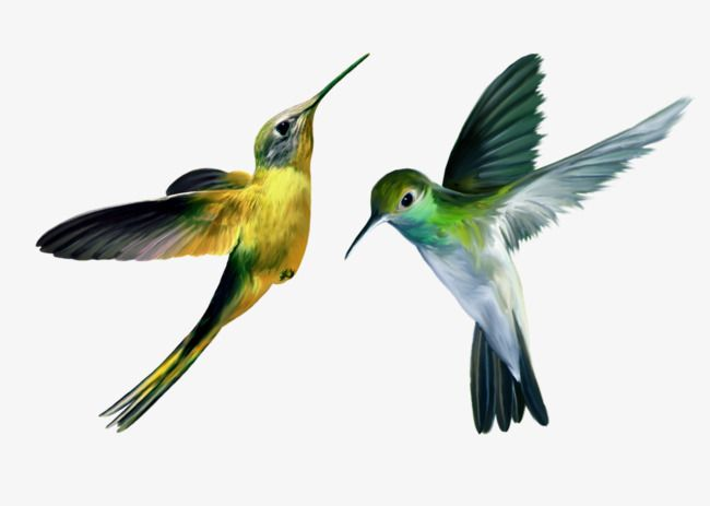 Yellow Green Hummingbird Green Bird Hummingbird Bird Art