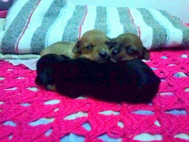 Cachorritos.amor