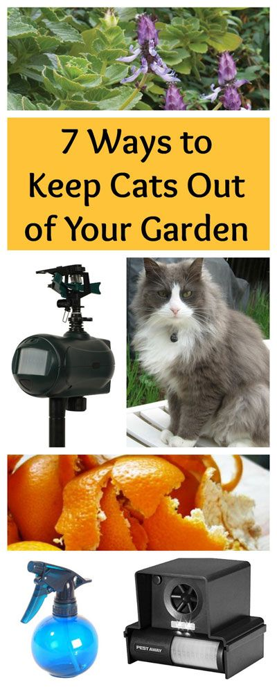 Nobody wants cats digging in their garden--or worse, using it as a bathroom. Here are 7 proven ways to keep the kitties out of your garden.