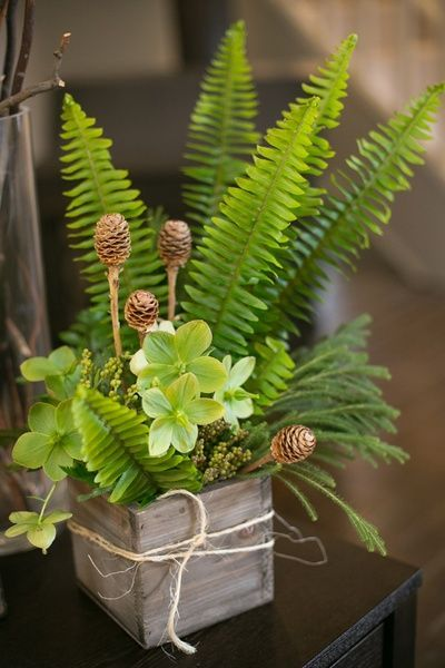 Ferns And Leaves In Wooden Box Woodland Themed Baby