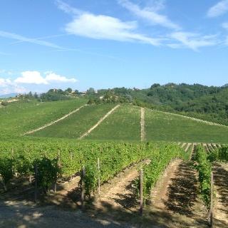 Vineyards in Gavi #piemonte--most likely of the Cortese grape that makes Gavi DOCG wine http://www.winepassitaly.it/index.php/en/travel-wineries-piedmont/maps-and-wine-zones/gavi-and-tortonese/focus/gavi