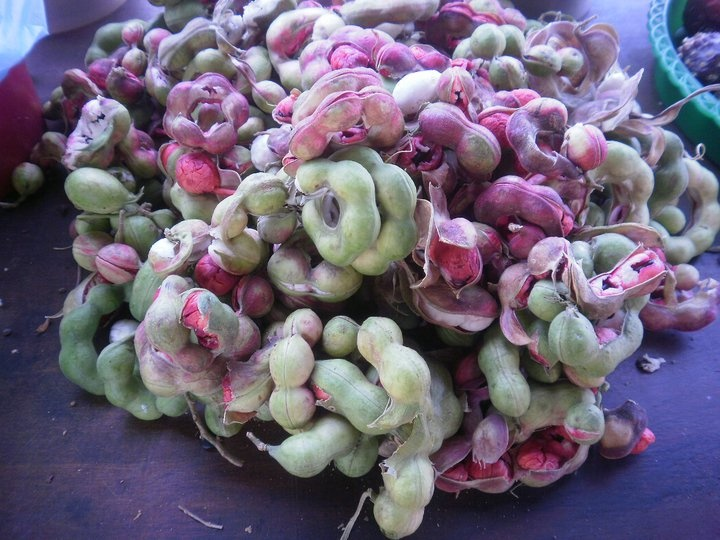 Guamuchil, fruta exótica de Pajacuarán, Mich. Mex.