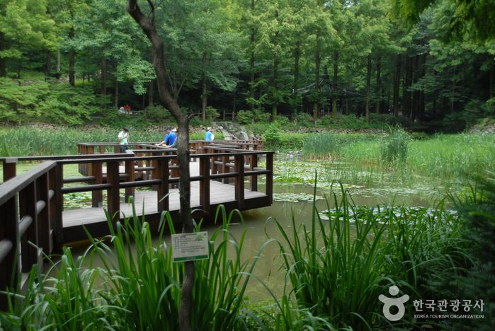 Jangtaesan Recreational Forest (장태산자연휴양림), Chungcheongdo's Korea100 Category : Nature, Natural Attractions, Natural Recreation Forest Tour Information :  Daejeon-si Seo-gu Jangan-dong is located at the base of Jangtaesan Mountain Natural Recreation Forest and consists of a dense forest of ginkgo trees. ..
