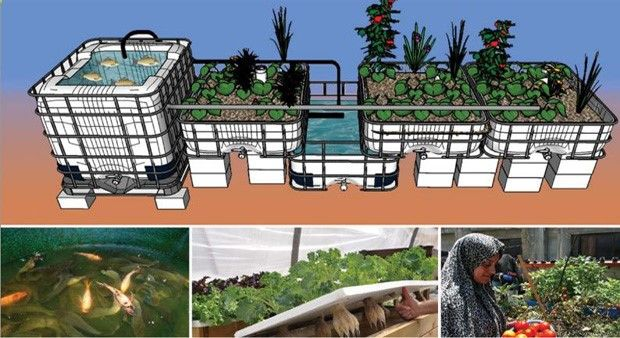 Aquaponics - Osmose – ferme aquaponique – Lagriculture 2.0 : Produire plus, mieux, et avec moins. Plus - Break-Through Organic Gardening Secret Grows You Up To 10 Times The Plants, In Half The Time, With Healthier Plants, While the Fish Do All the Work... And Yet... Your Plants Grow Abundantly, Taste Amazing, and Are Extremely Healthy