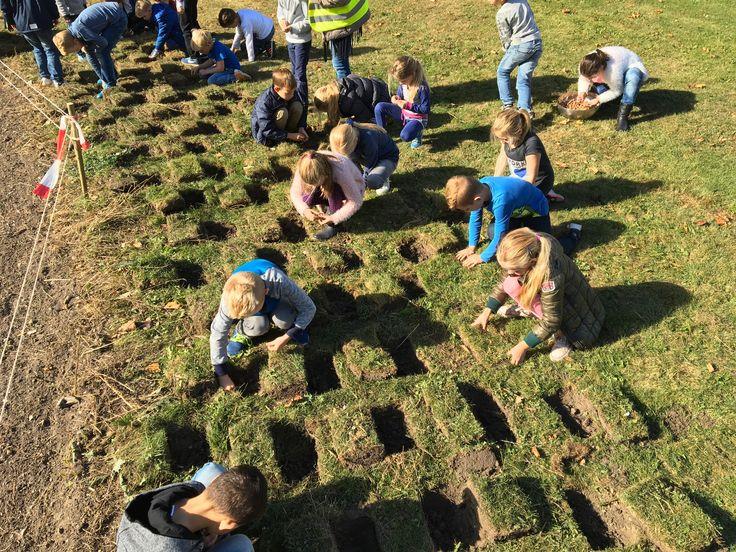 Samen planten van 2000 biologische boerenkrokussen St. Martinusschool