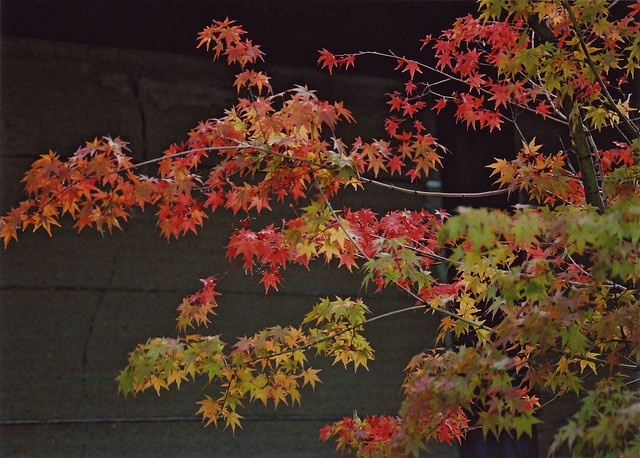 momiji reaching out by ricoeurian, via Flickr