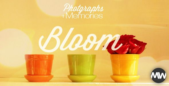 Photographs and Memories Bloom