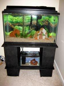 strong, inexpensive aquarium stand.  Cinderblocks!