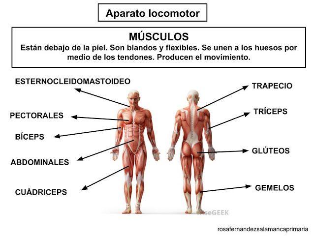 Funcion De Relacion Organos De Los Sentidos Sistema Nervioso Y