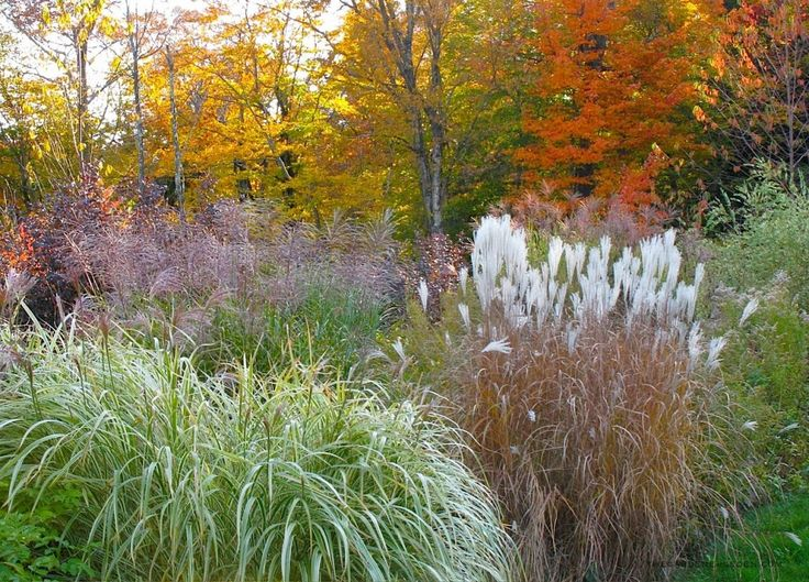 bright colored grasses