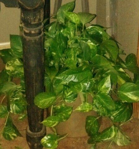 Good Indoor Plants Low Lights